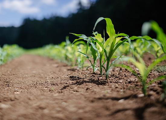 AL-KO Trädgårdsvält fördelar| Stabilisera marken og trycka ned gräsfröna